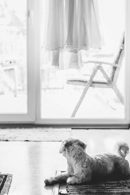 Destination Wedding Photographers, Bohemian wedding in Slovakia, dog at wedding