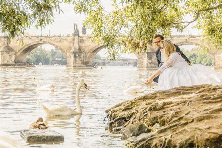 Feeding swans in Prague